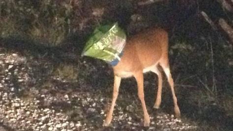 deer-ritos