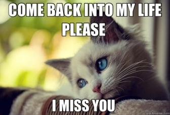 sad kitty